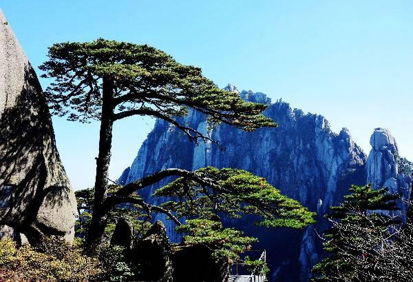 山水树风景高清